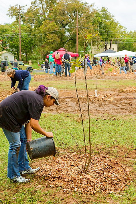 Festival Beach Food Forest workday_450px.jpg